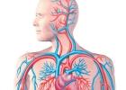 أبرز عوامل انخفاض الكولسترول الضار ؟؟ تعرف