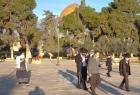 """القدس: (69) مستوطنًا اقتحموا ساحات """"الأقصى"""" بحراسة مشددة"""