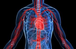 كم عدد الأعضاء في جسم الإنسان؟