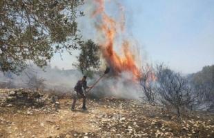 """اندلاع حريق في """"شاعر هنيغف"""" بفعل بالونات حارقة أطلقت من غزة"""