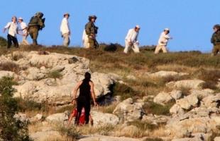 مستوطنون يقطعون مئات أشجار الزيتون والكرمة جنوب بيت لحم
