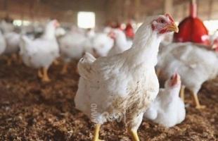 أسعار الدجاج والفواكه والخضروات في سوق غزة