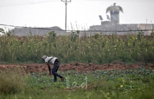 قوات الاحتلال تُطلق نيرانها تجاه المزراعين جنوب قطاع غزة