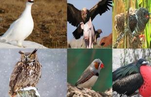 أشهر 10 طيور يرفضها البشر