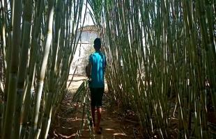 فيديو - نجاح زراعة قصب السكر بكميات وفيرة في قطاع غزة