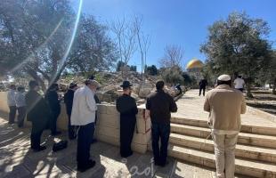 """محدث.. القدس: (215) مستوطناً يقتحمون ساحات """"الأقصى"""" بحراسة مشددة"""