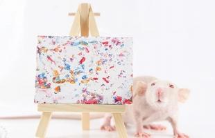 صدق أو لا تصدق .. مزاد أونلاين للوحات من إبداع فئران