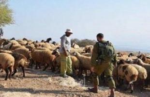 """الجيش الإسرائيلي يسرق (100) رأس """"ماعز"""" جنوب لبنان"""
