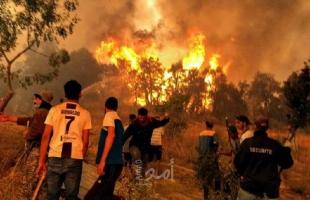 """الحكومة الجزائرية تقرر تعويض """"الفلاحين المتضررين"""" من حرائق الغابات"""