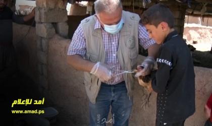 بيطري يعالج الماشية للنازحين في ريف العراق
