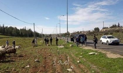 نابلس: مستوطنون يسرقون سبعة خراف من جالود