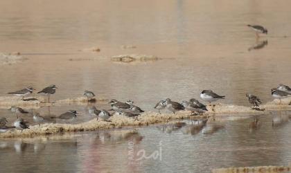 موقع محميات فلسطين ينظم فعالية توعوية بـ طائر السمامة العالمي في بيت لحم