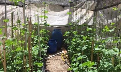 """""""تنمية بيت لحم"""" تتفقد مشاريع التمكين الاقتصادي بمنطقة الخضر"""
