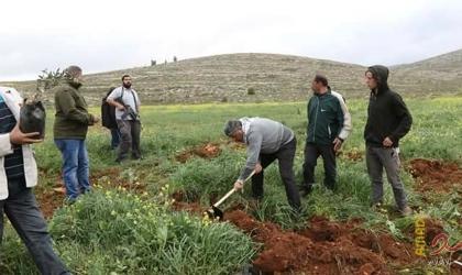 مستوطنون يزرعون أشجارًا في منطقتي الفارسية وعين الحلوة بالأغوار الشمالية