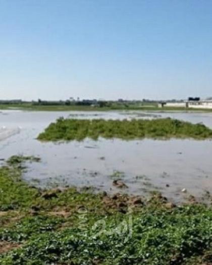 القطاع الزراعي يستنكر إغراق قوات الاحتلال الأراضي الزراعية شرق غزة