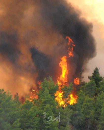 ارتفاع قياسي في حرائق مستوطنات الضفة منذ بداية (2021)